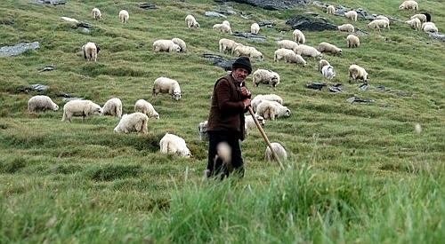 Oile si caprele, chipuri ale vietuirii noastre