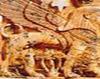 Zeii fenicienilor