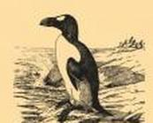 Pinguin